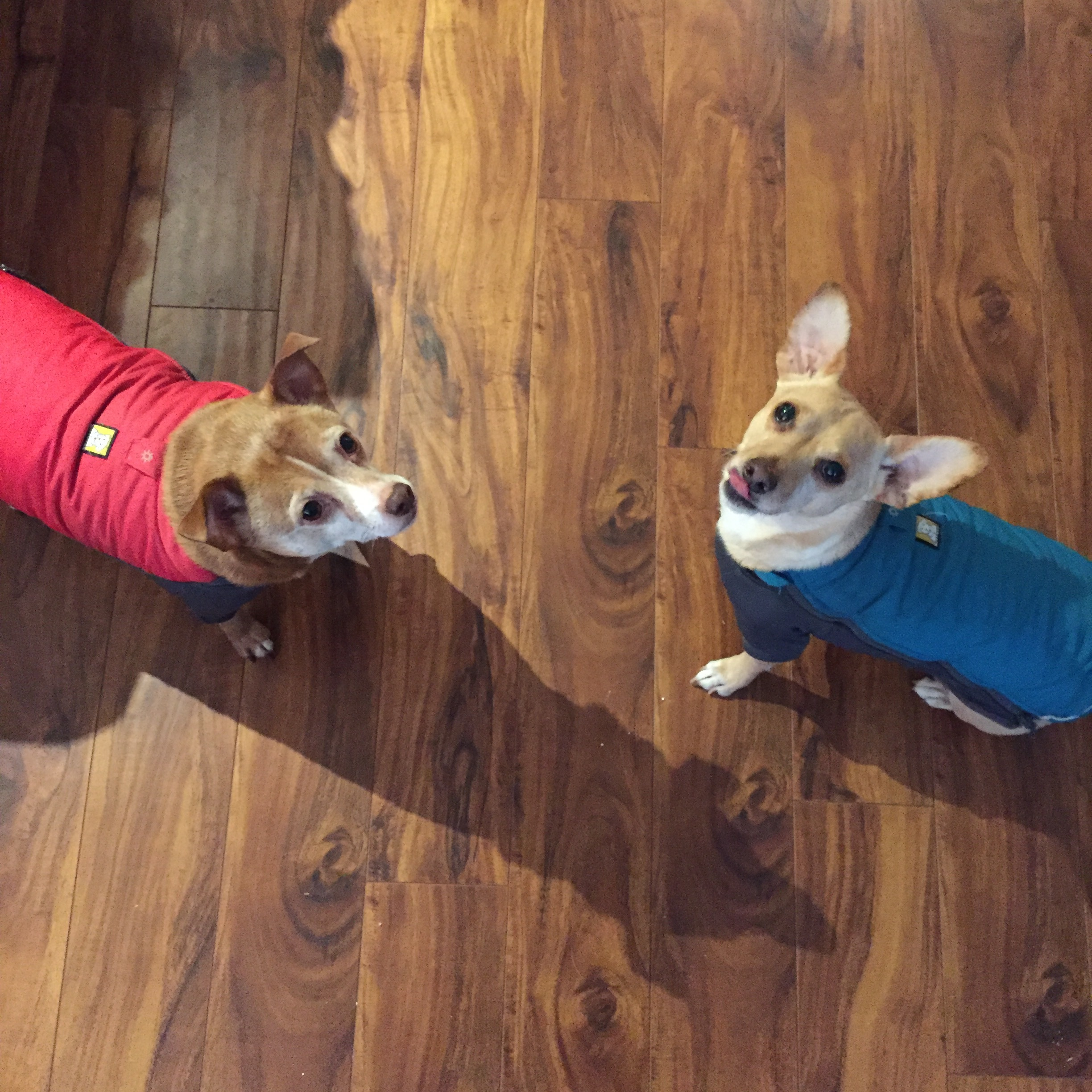 Nathan in red and Tucker in blue, blissfully unaware of the crazed struggle that was putting those jackets one.