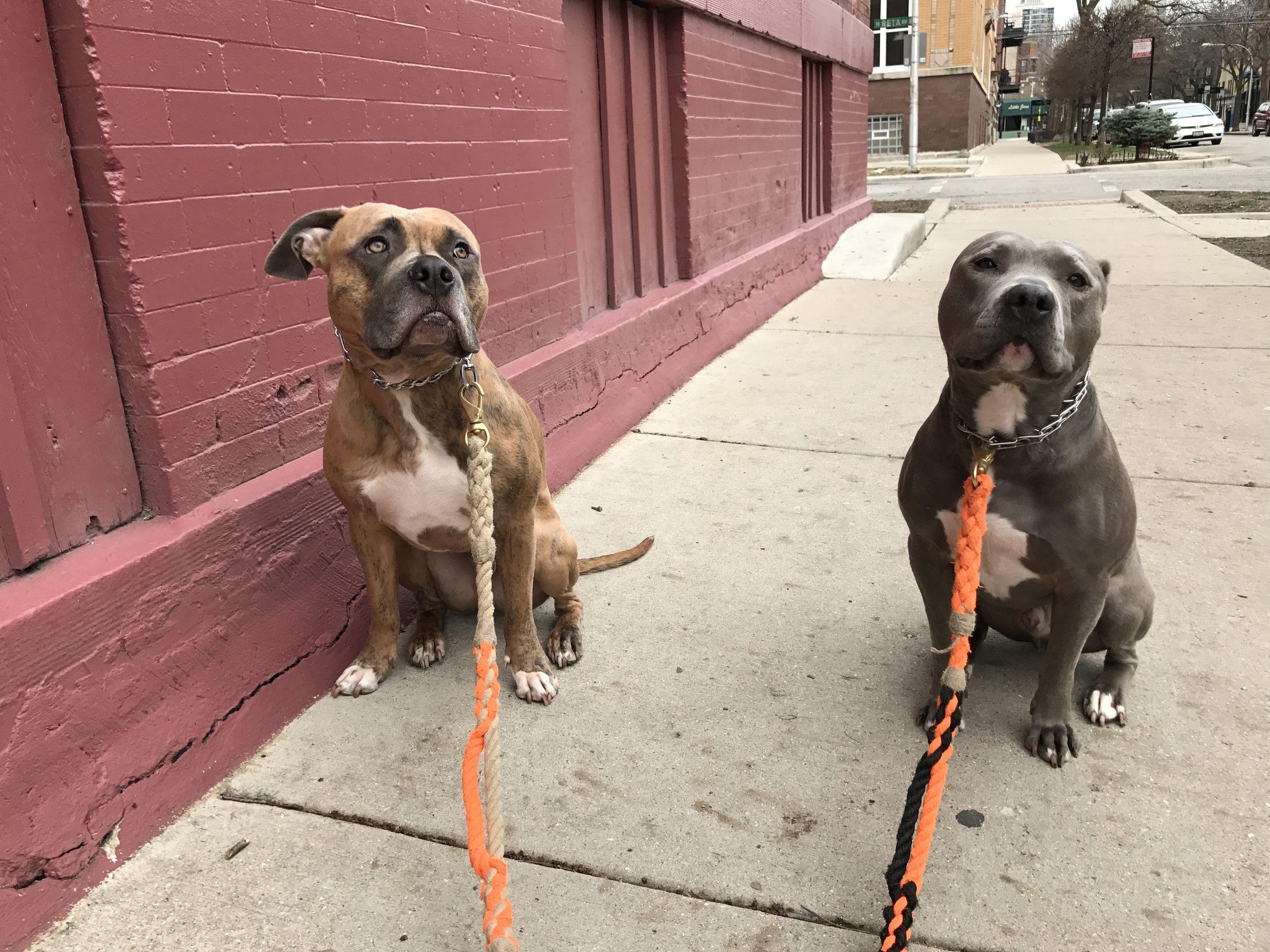 Lincoln & Winston , Spring 2017