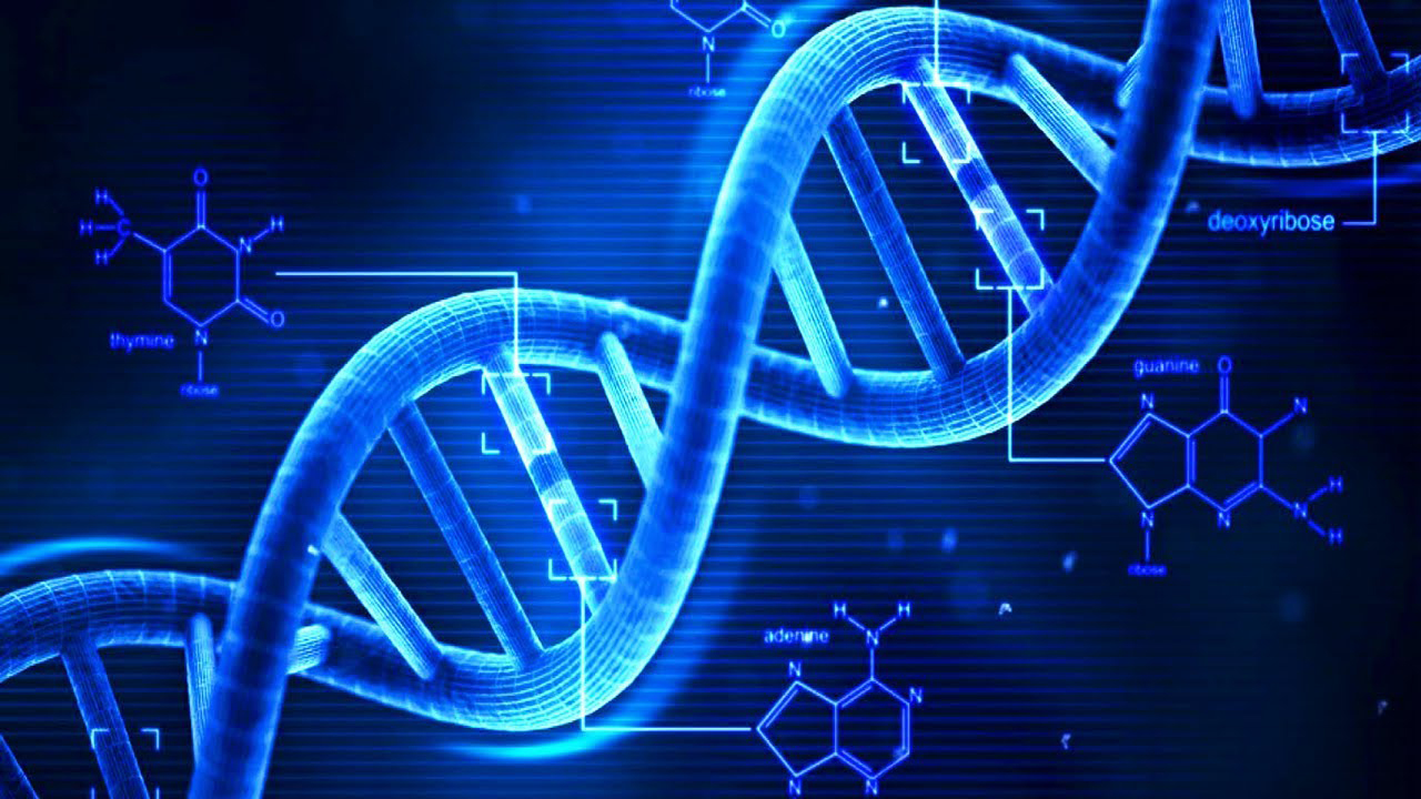 NA, or deoxyribonucleic acid, is the hereditary material in humans and almost all other organisms. Nearly every cell in a person's body has the same DNA.