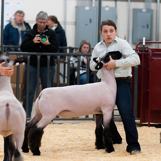 Get it girl! #stockshowlife #4H #FFA