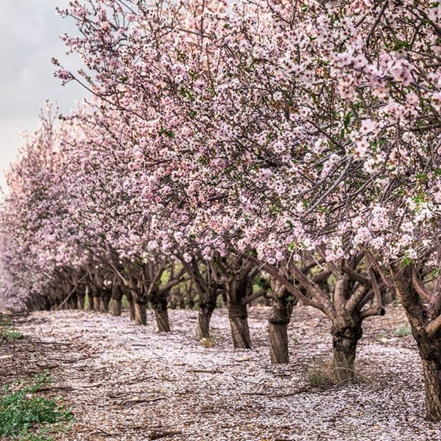 Spring in Israel. This and other photos make nice side income. Register in this link and start making money today!  https://submit.shutterstock.com/?ref=1465475