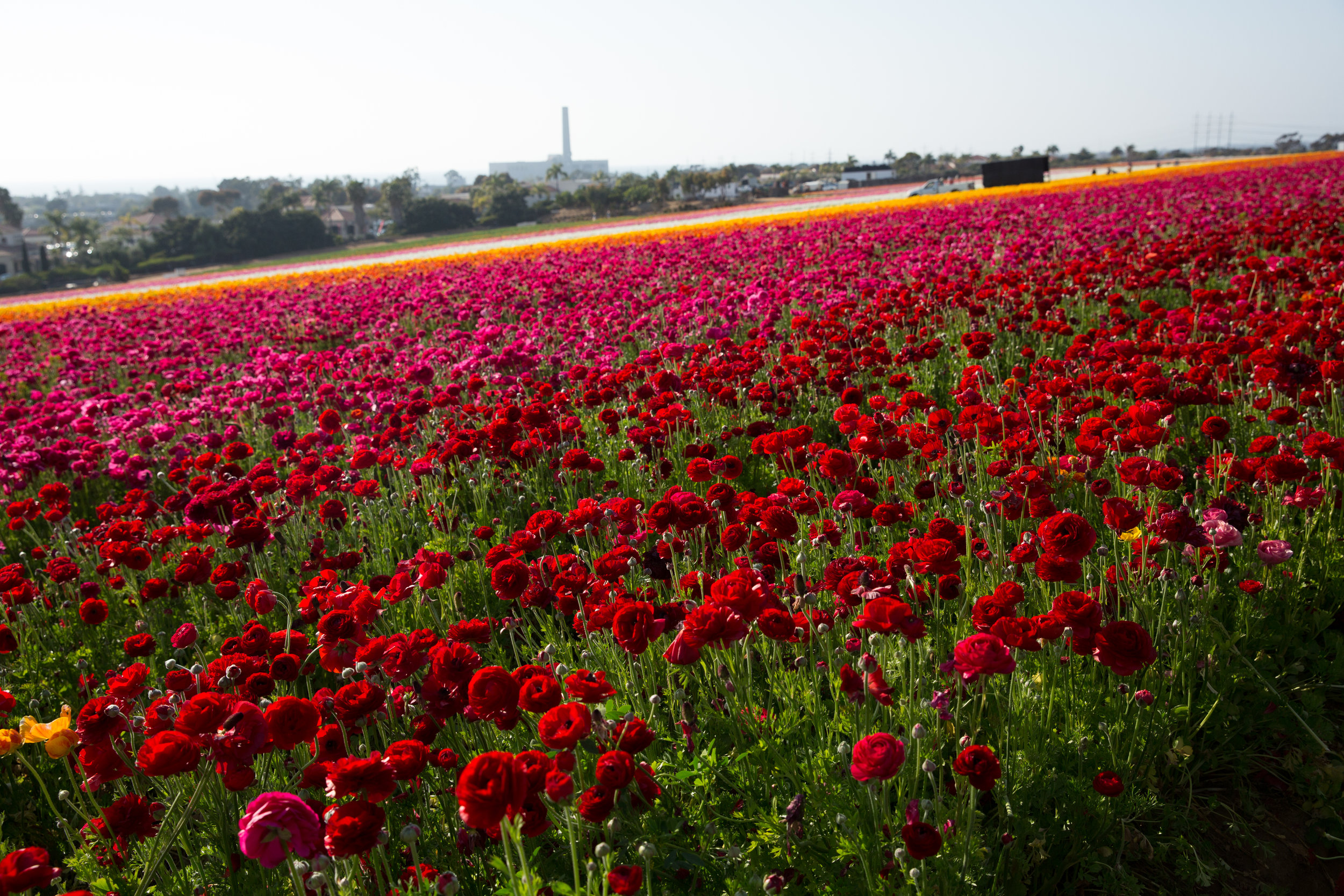 FLOWER_FIELDS-60.jpg