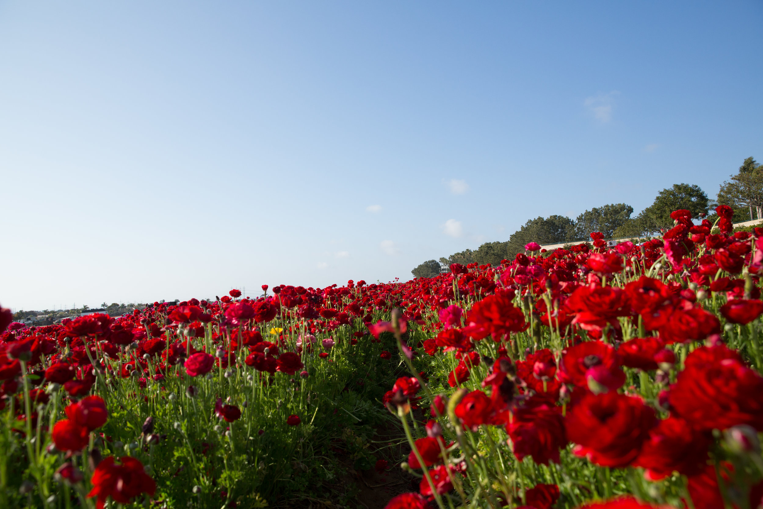 FLOWER_FIELDS-61.jpg