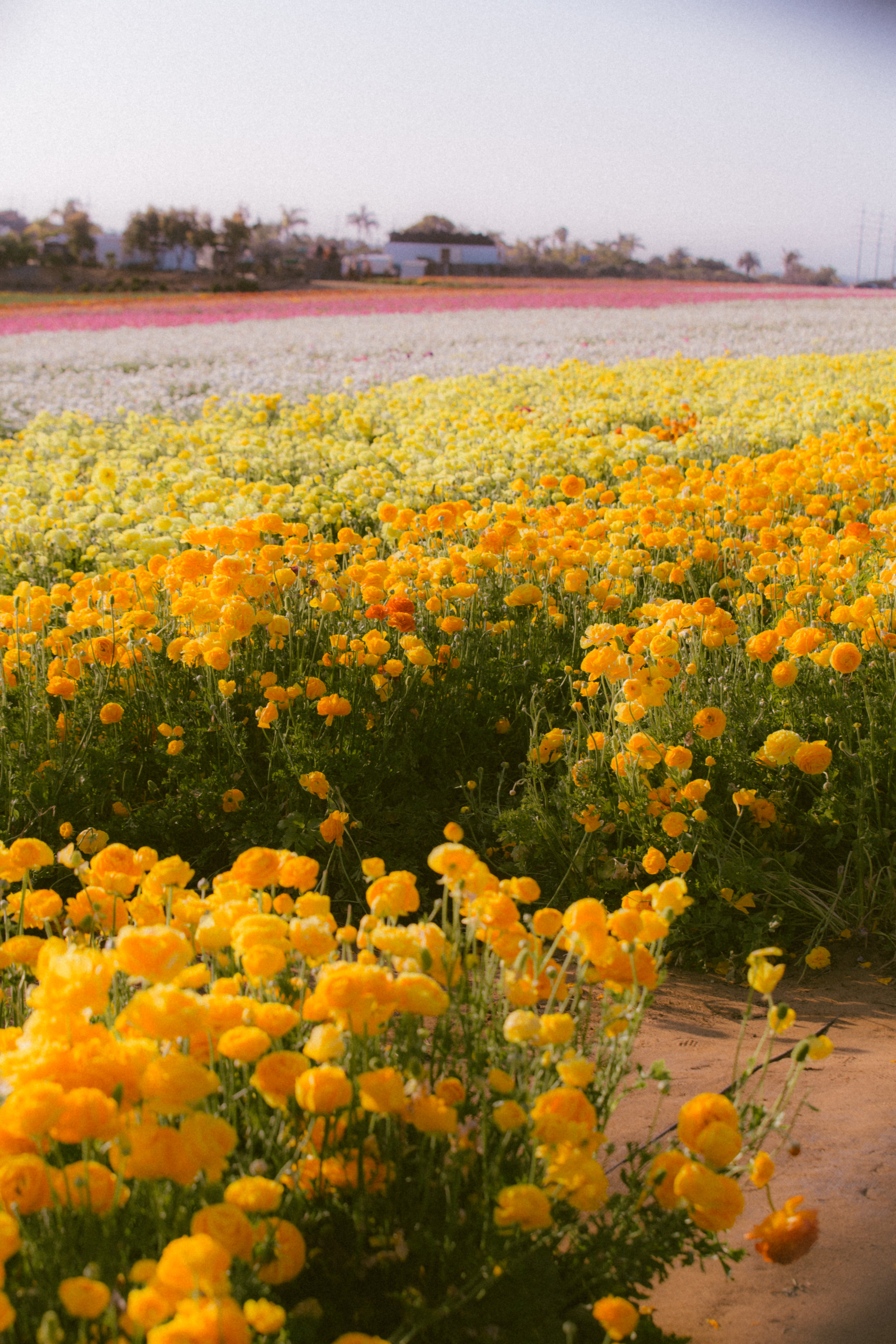 FLOWER_FIELDS-113.jpg
