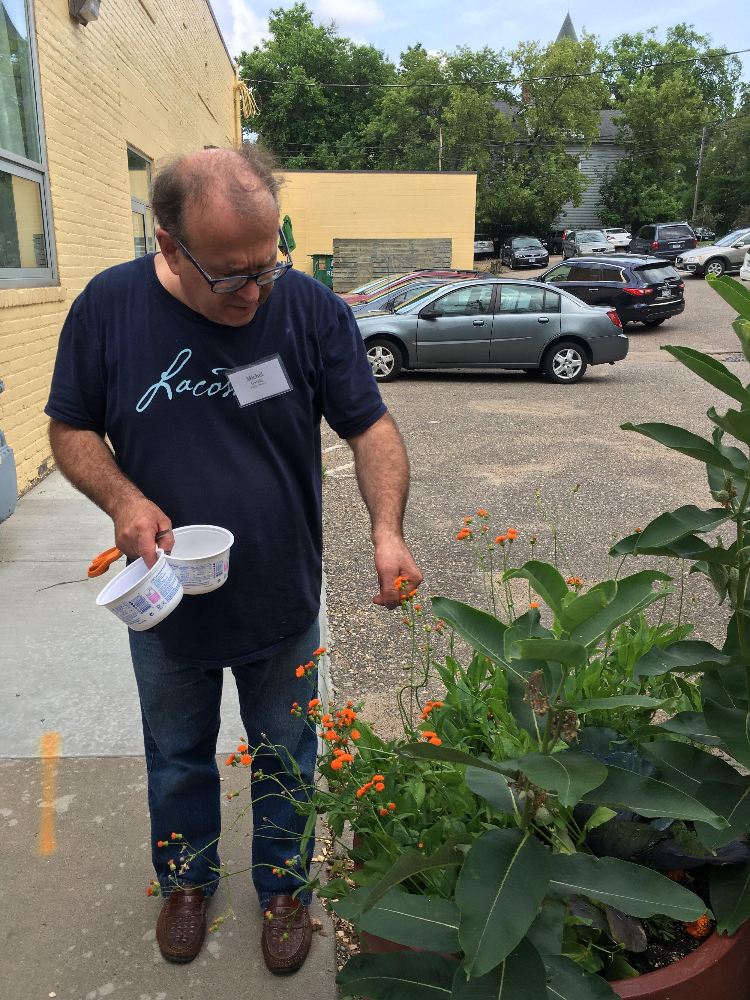 Michel Garcia choosing plants from the dye garden to test in an immersion dye bath.