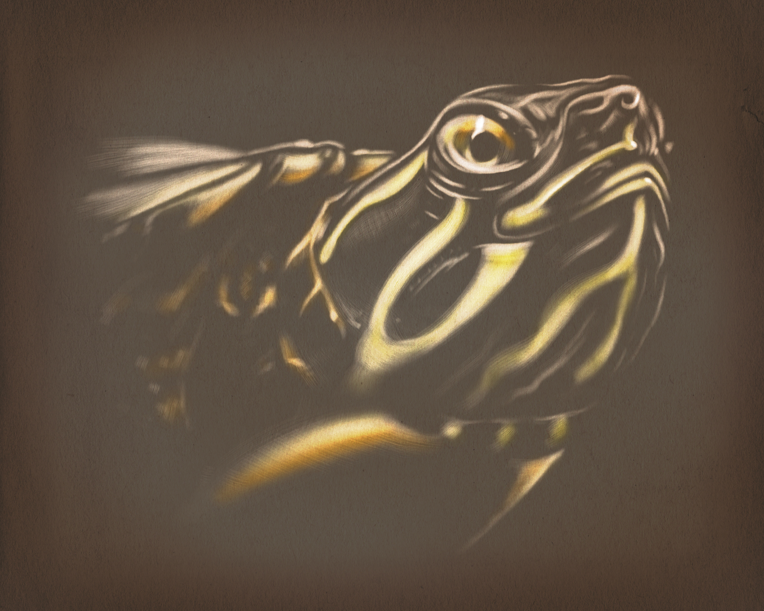 Oviatt the turtle