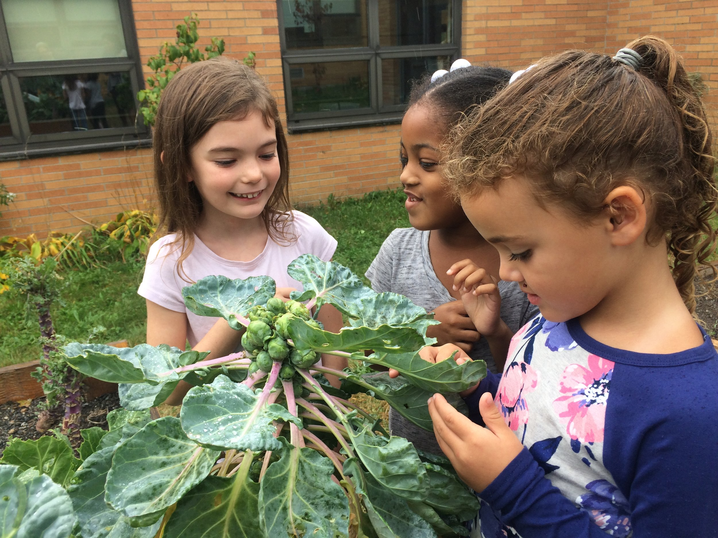 K students observing bug on brussel sprouts .JPG