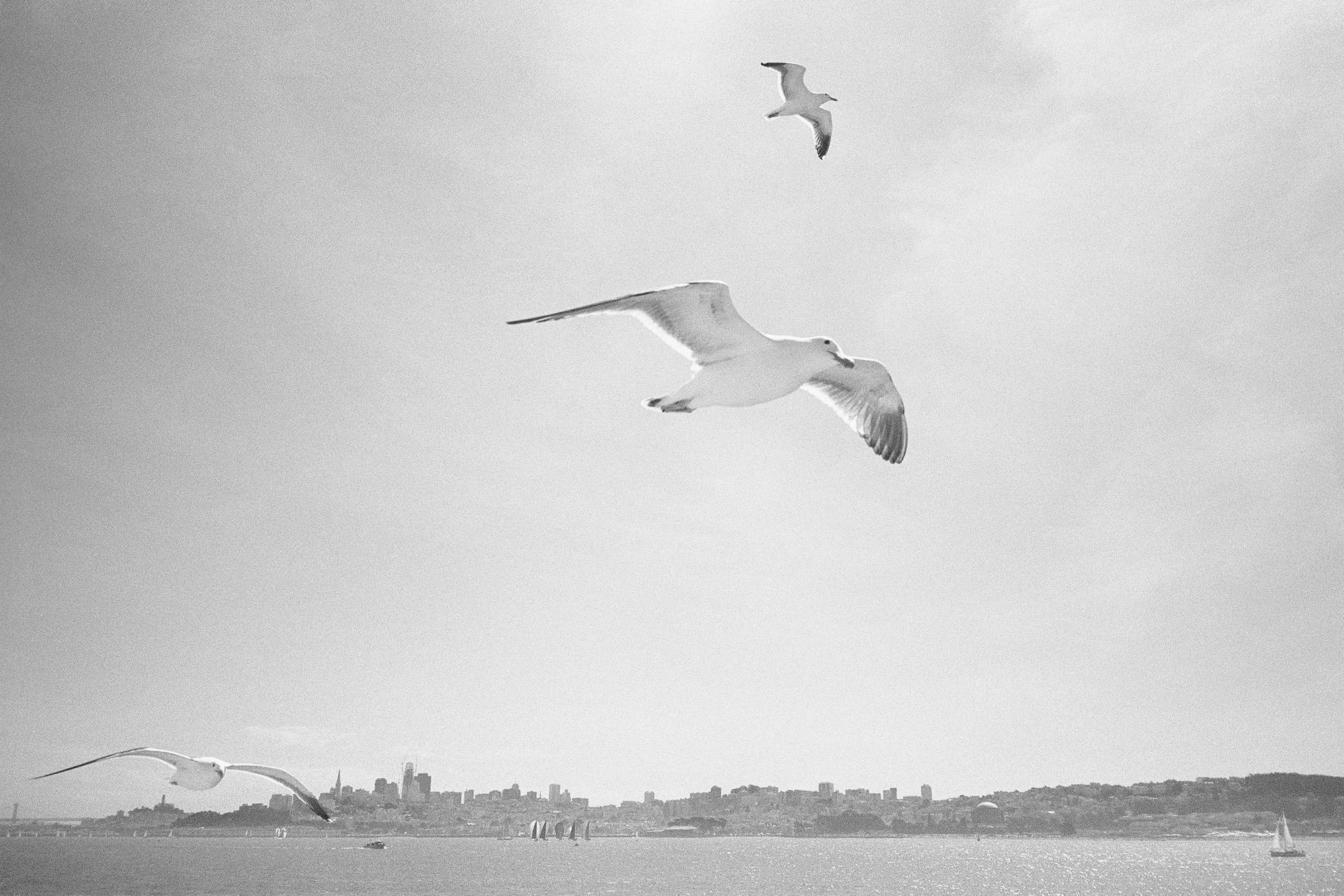 Bird_SF_Web.jpg