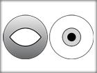 Fusion Lv. 1 -Stereoscope