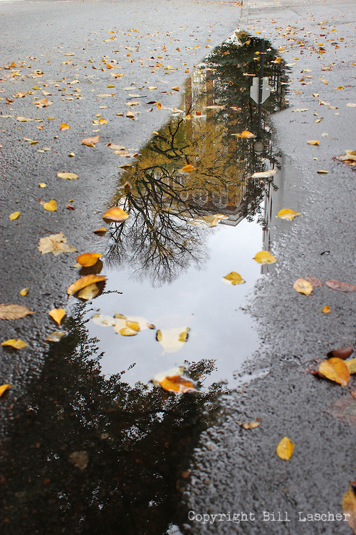 Leaves strewn across a puddle at the intersection of W Burnside and NW Park Ave. in Downtown Portland, Ore. ( Photo by Bill Lascher )