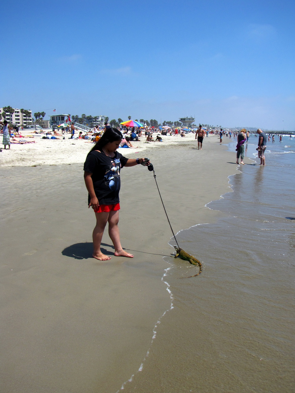 A woman walsk her iguana on Venice Beach. ( Photo by Bill Lascher )