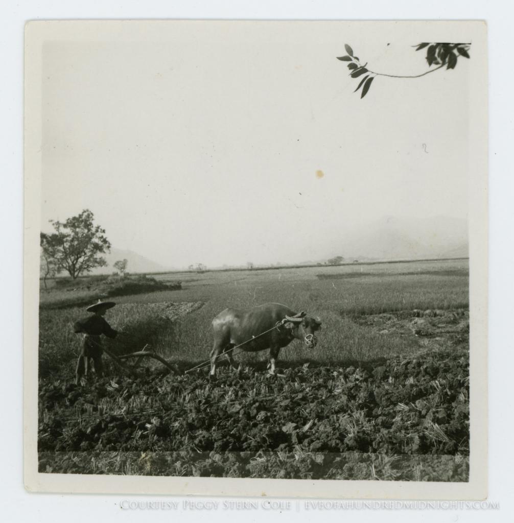 Square Print of Water Buffalo Pulling Plow.jpg