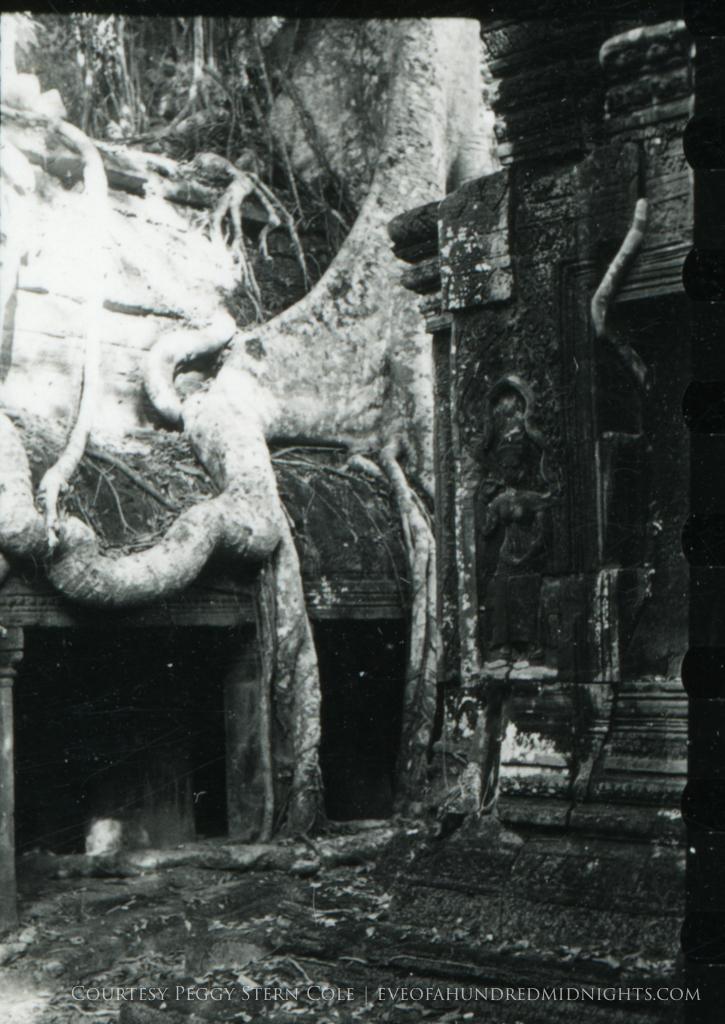 Large Angkor Wat Tree Root.jpg