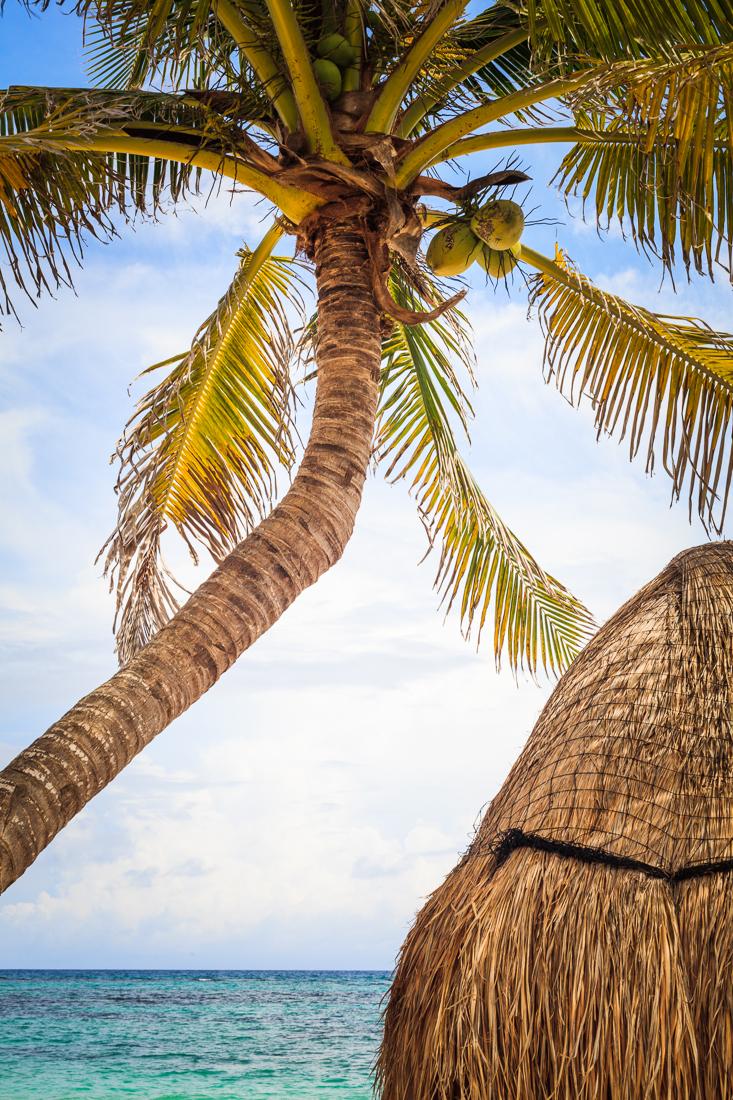 Akumal, Riviera Maya, Mexico 2013.