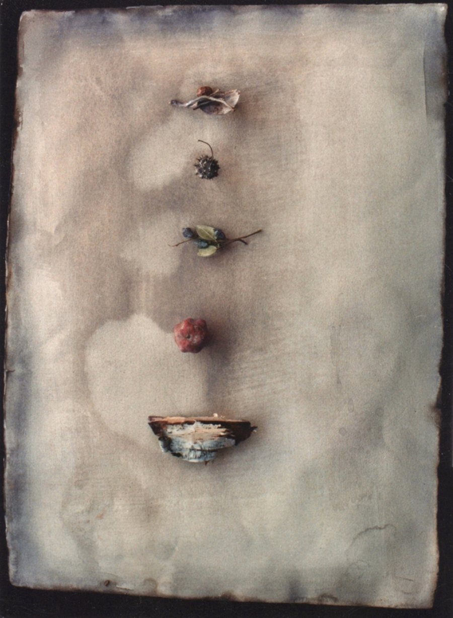 """FIVE NATURE OBJECTS 1991  C-PRINT  20"""" x 24"""""""