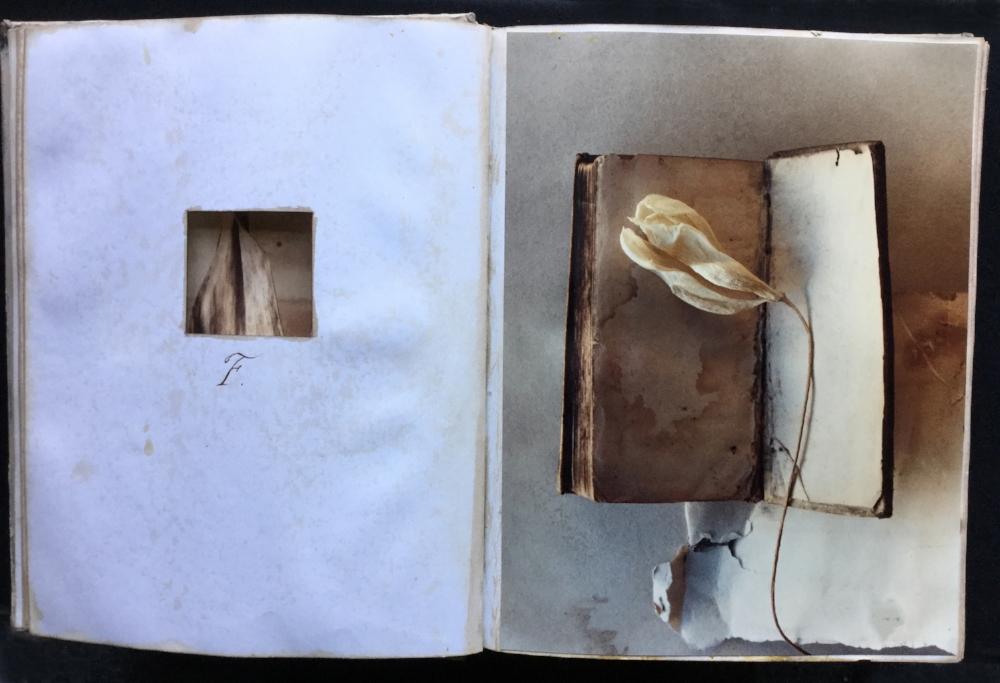 F. BOOK w F.jpg