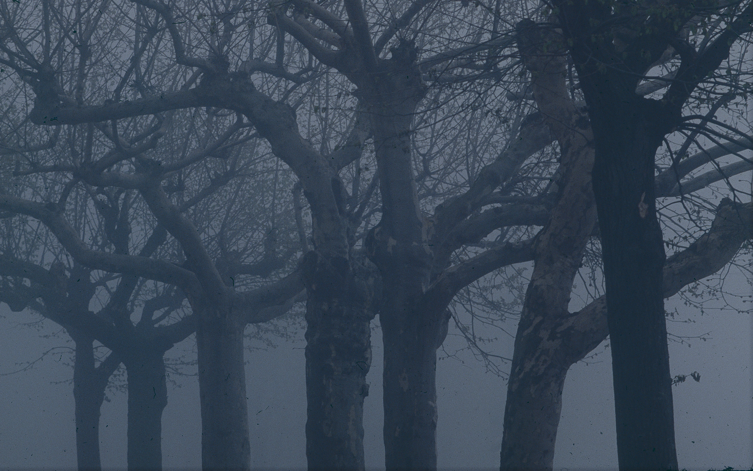 FENNEMORE trees.jpg
