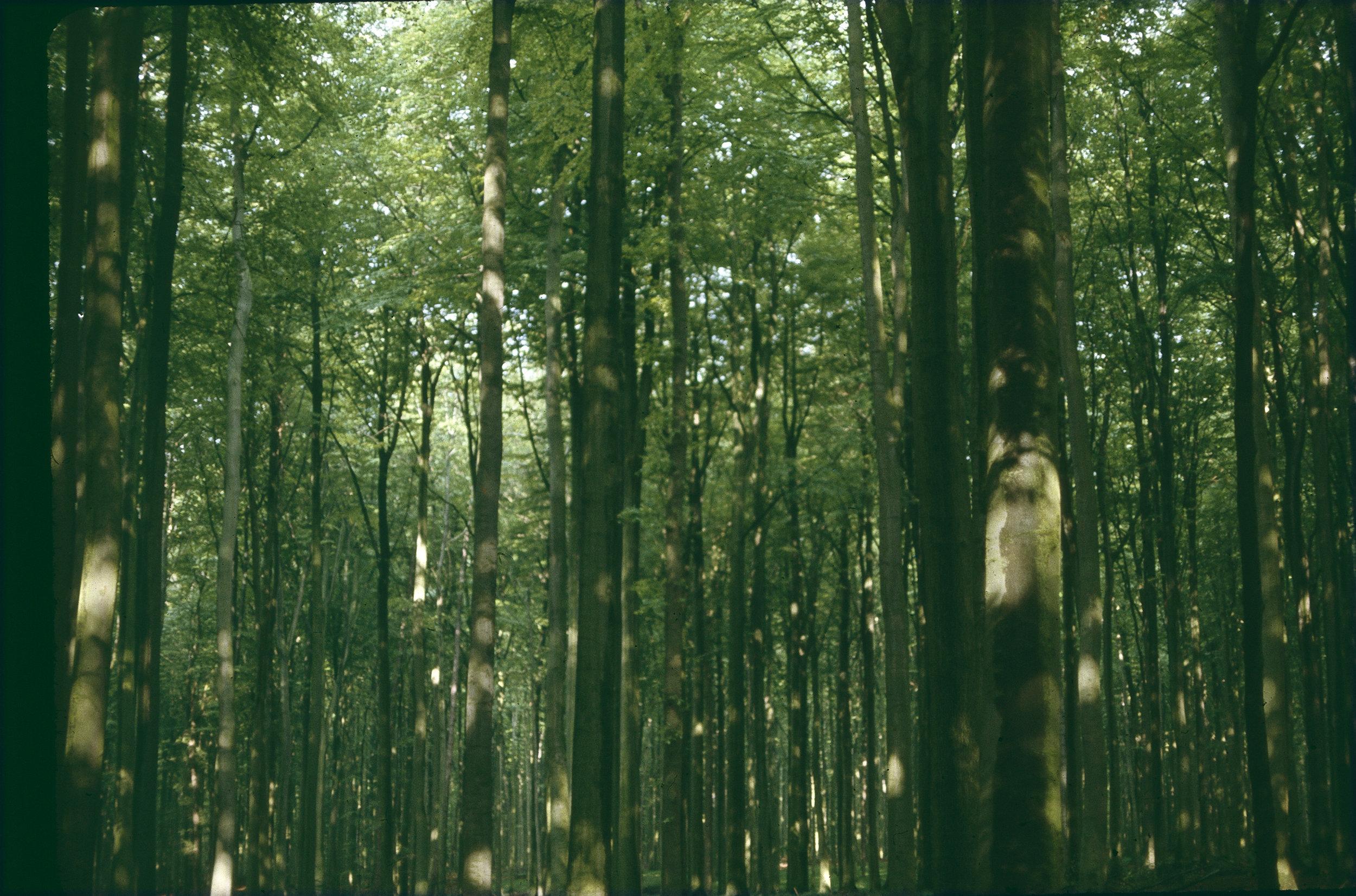 FOREST VROMERO.jpg