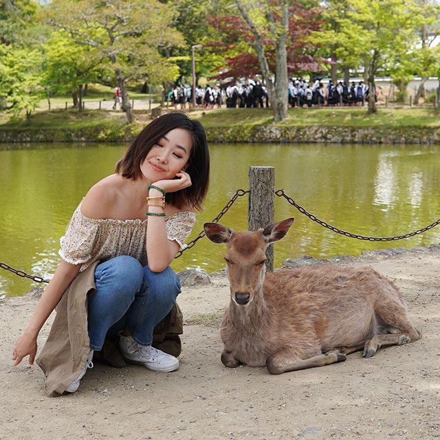 Oh deer 🦌 what a beautiful place where deer can roam free - deer were believed to be messengers to the gods in Shinto, especially Kasuga Shrine in the Nara Prefecture. It definitely felt otherworldly being able to coexist and interact freely with these deer who would normally run away from you in the wild.