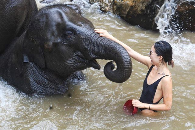 Such a surreal experience bathing, feeding, and interacting with these gentle giants 🐘 elephant poaching is still alive and well in Thailand and sanctuaries like these help protect these beautiful creatures from being hunted and otherwise abused for entertainment purposes. Bathing with them at the @elephantjunglesanctuary, I saw so much joy and happiness in their eyes as they played with each other and enjoyed the water. I felt so connected with nature and hope they continue to thrive. As I get older, I hope to be more conscious of my actions and make choices that are helpful to the world. There are still animals that are in danger due to humans' disregard and ignorance to the animals who deserve to be here just as much as we do. Whether it's making the choice to not use plastic, use environmentally-friendly products, not throw trash into the ocean, or making a conscious effort to educate oneself and better the environment for all the animals that live in it, I hope we all become more aware overall in every decision we make because these animals and our environment don't deserve to die because of human ignorance. #letsbebetterhumans #worldenvironmentday