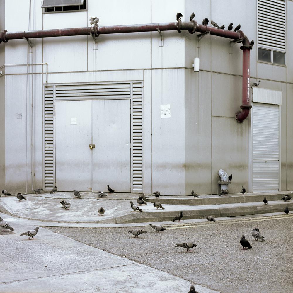 bird-JW.jpg
