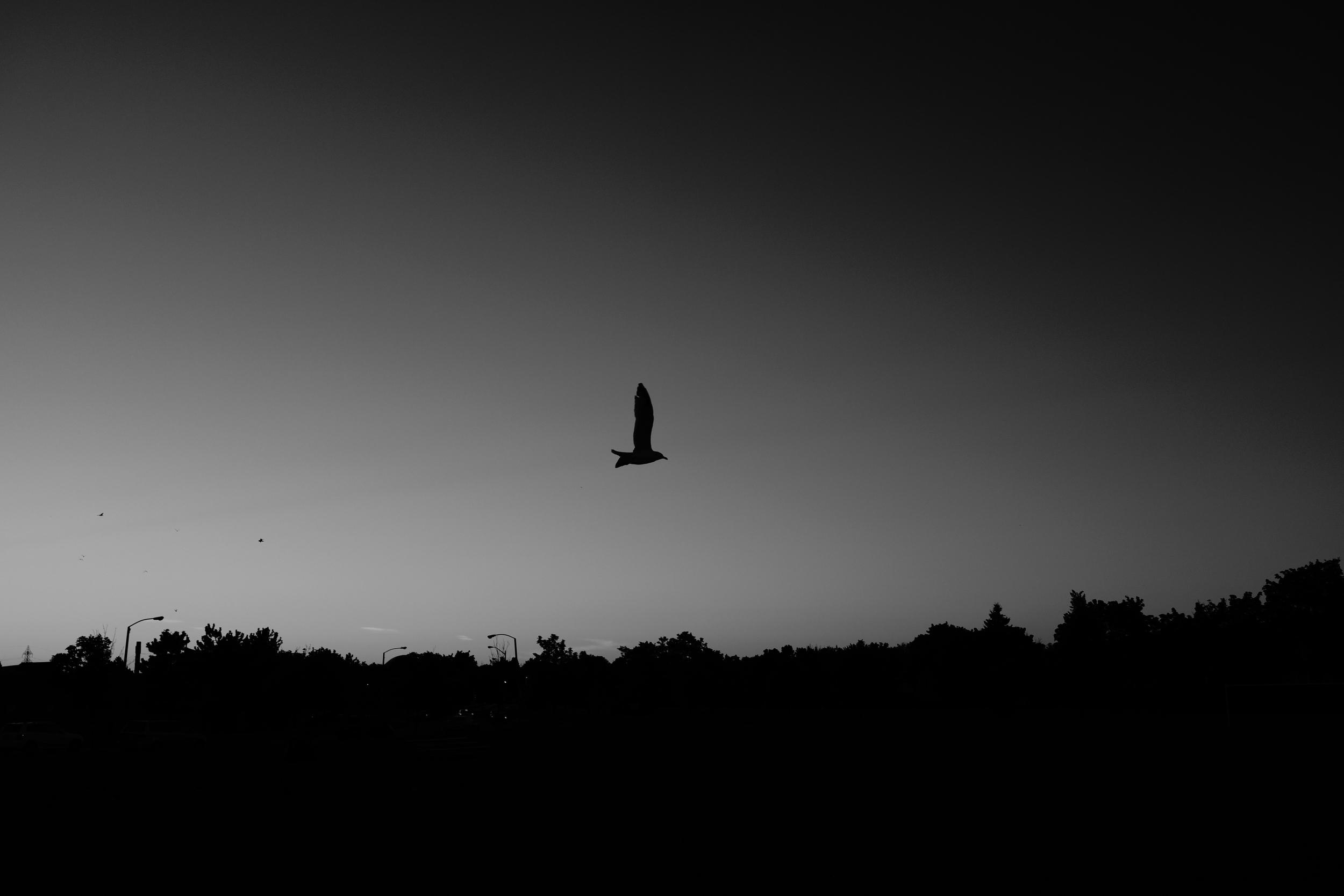 bird-last.jpg