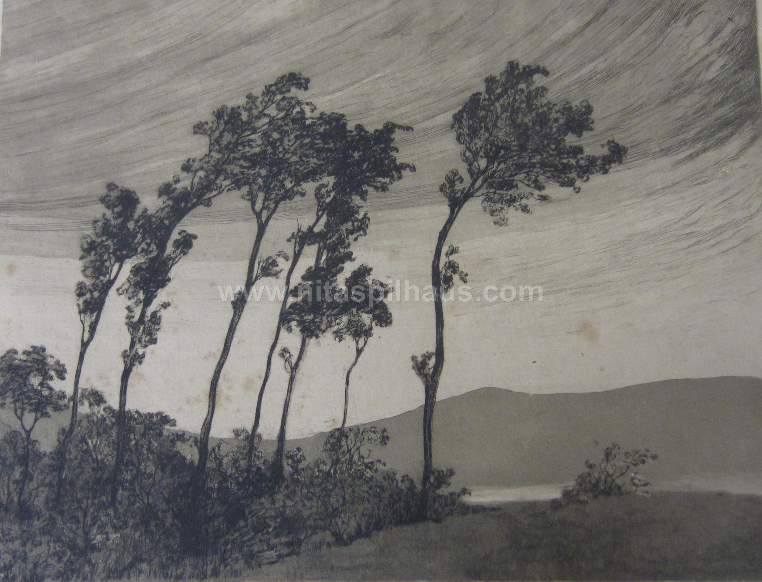 Etching windswept trees 16 x 11.5 Collector 11