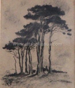 Stone Pines Charcoal on paper 22 x 18 Collector 14