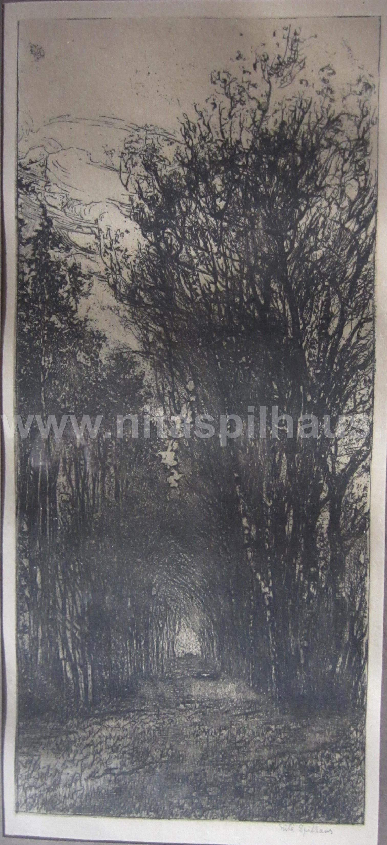 Etching Avenue of Trees 26 x 11 Collector 15