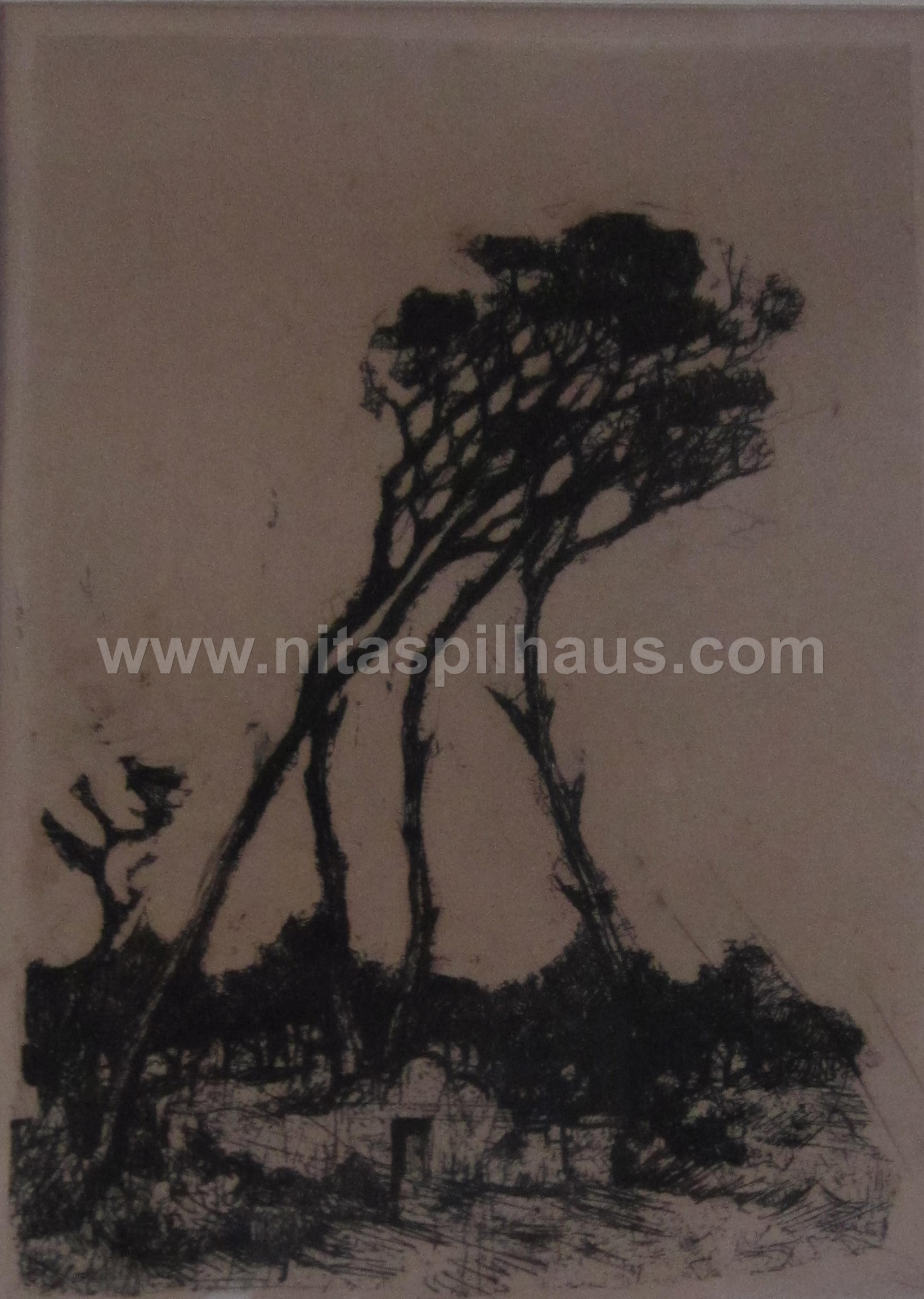 Etching windswept trees  Kromboom, 16 x 11 Collector 15