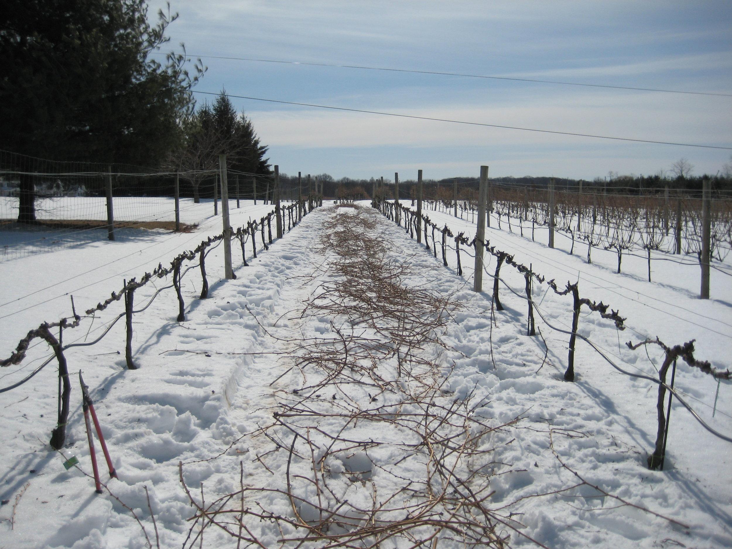 winter_pruning_II.jpg