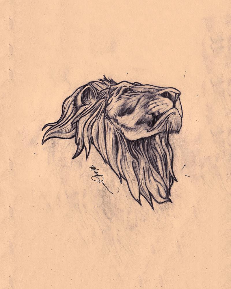 lion-macquarrie.jpg