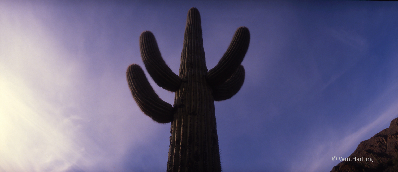 Southwest cactus w Ice.jpg