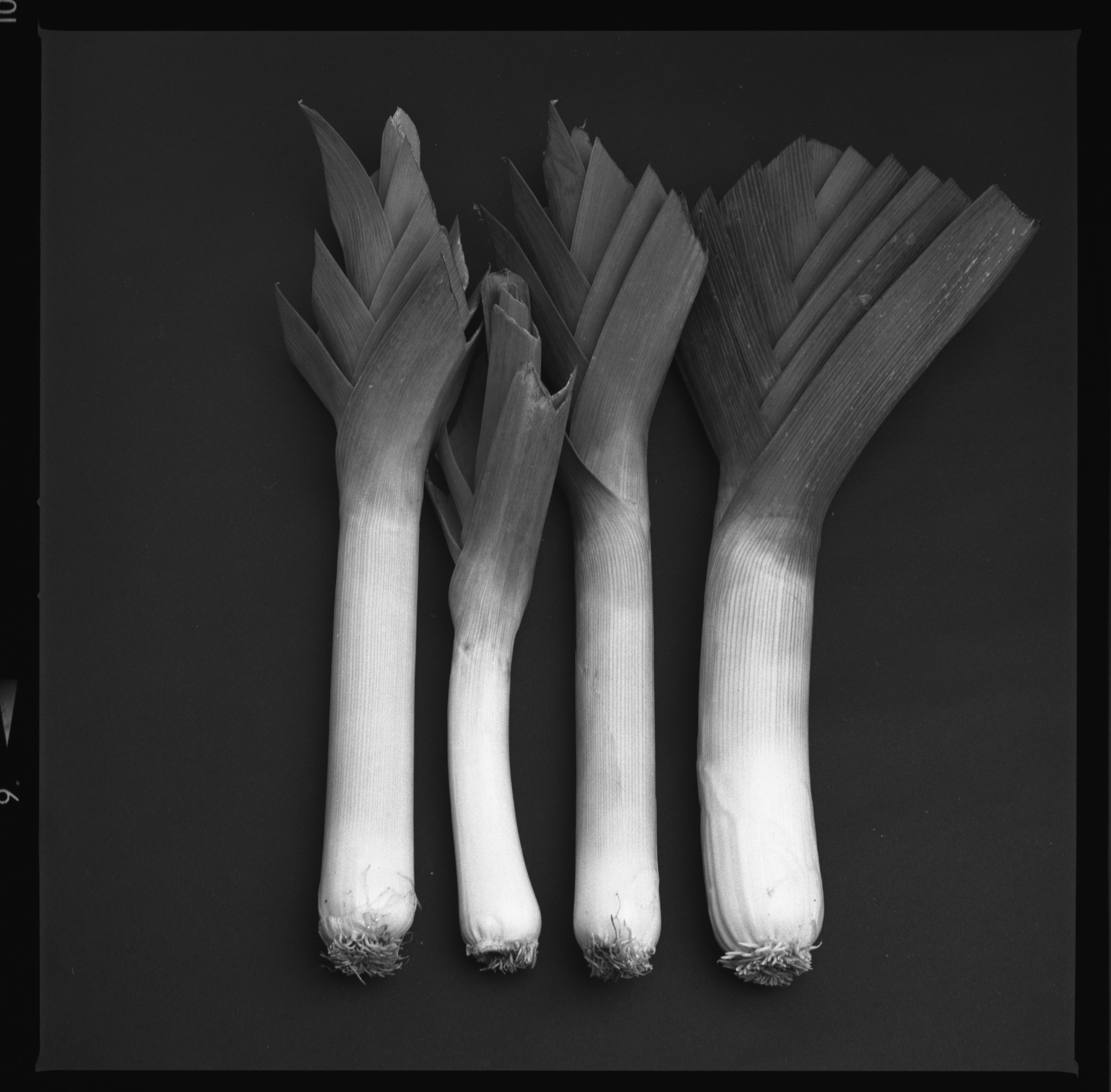Leeks, from the Produce Series in  STILL LIFE