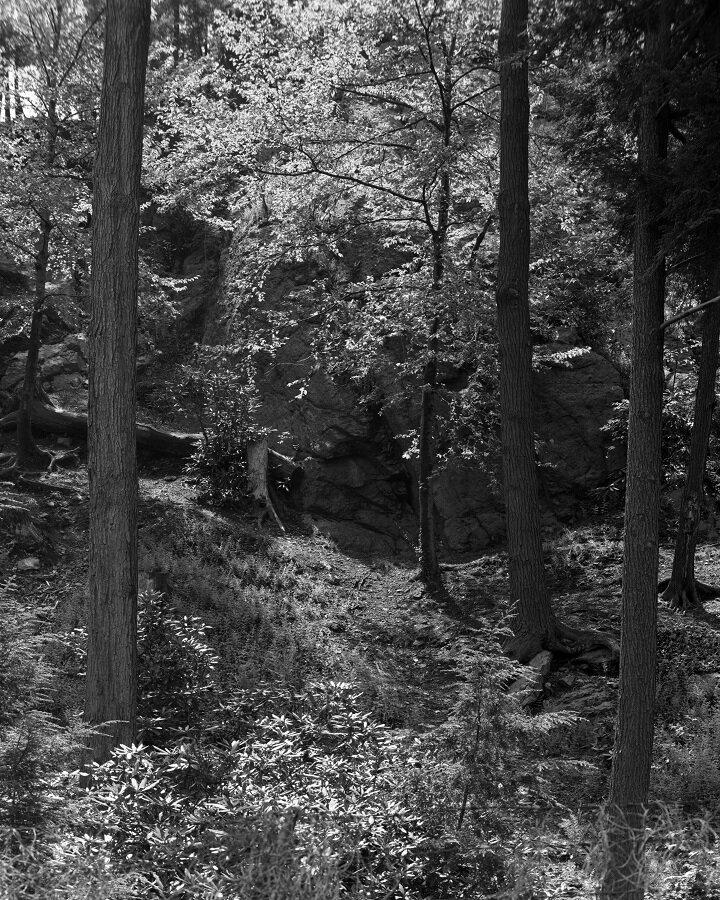 Arnold Arboretum, exhibition print