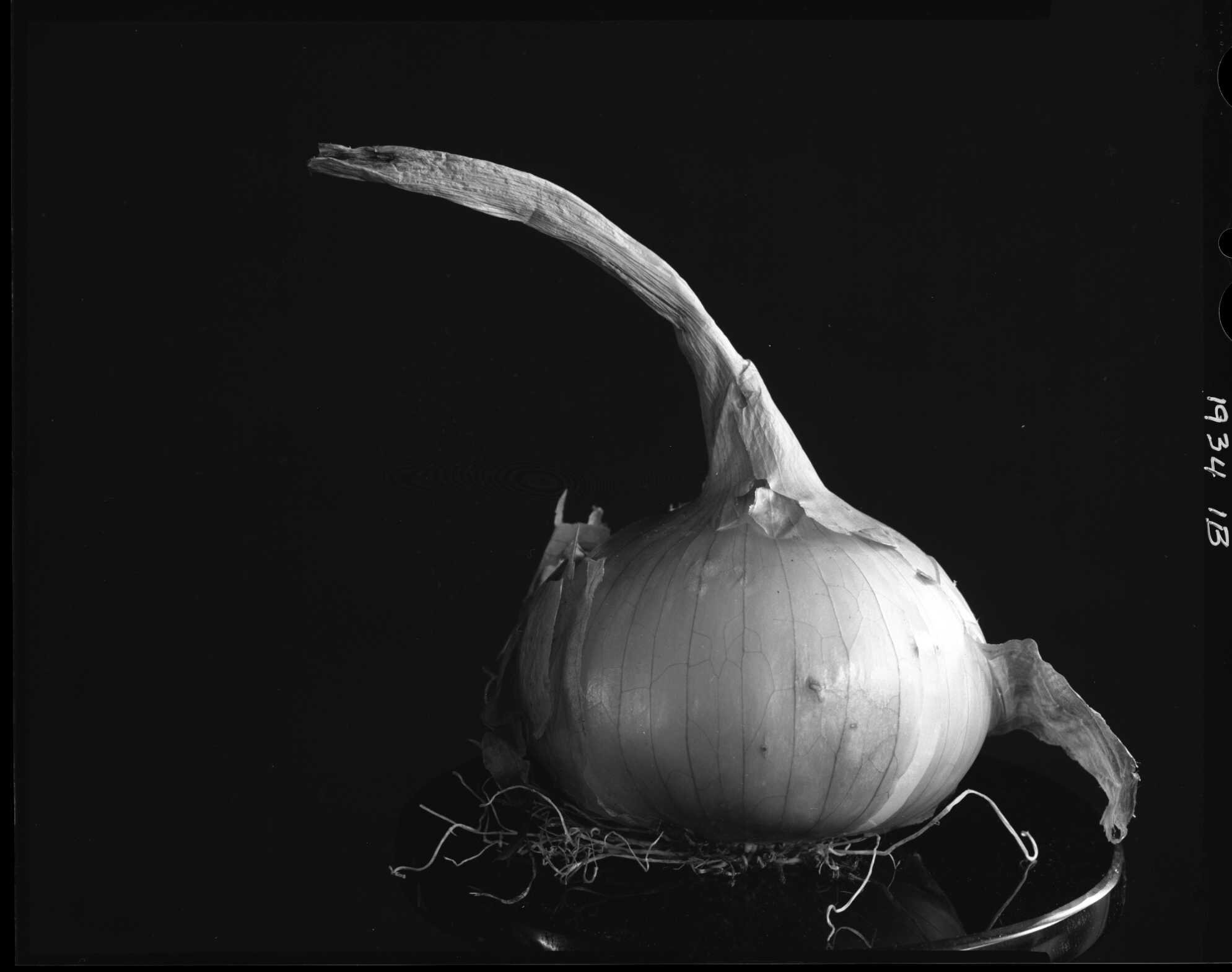 Onion, from the Produce Series