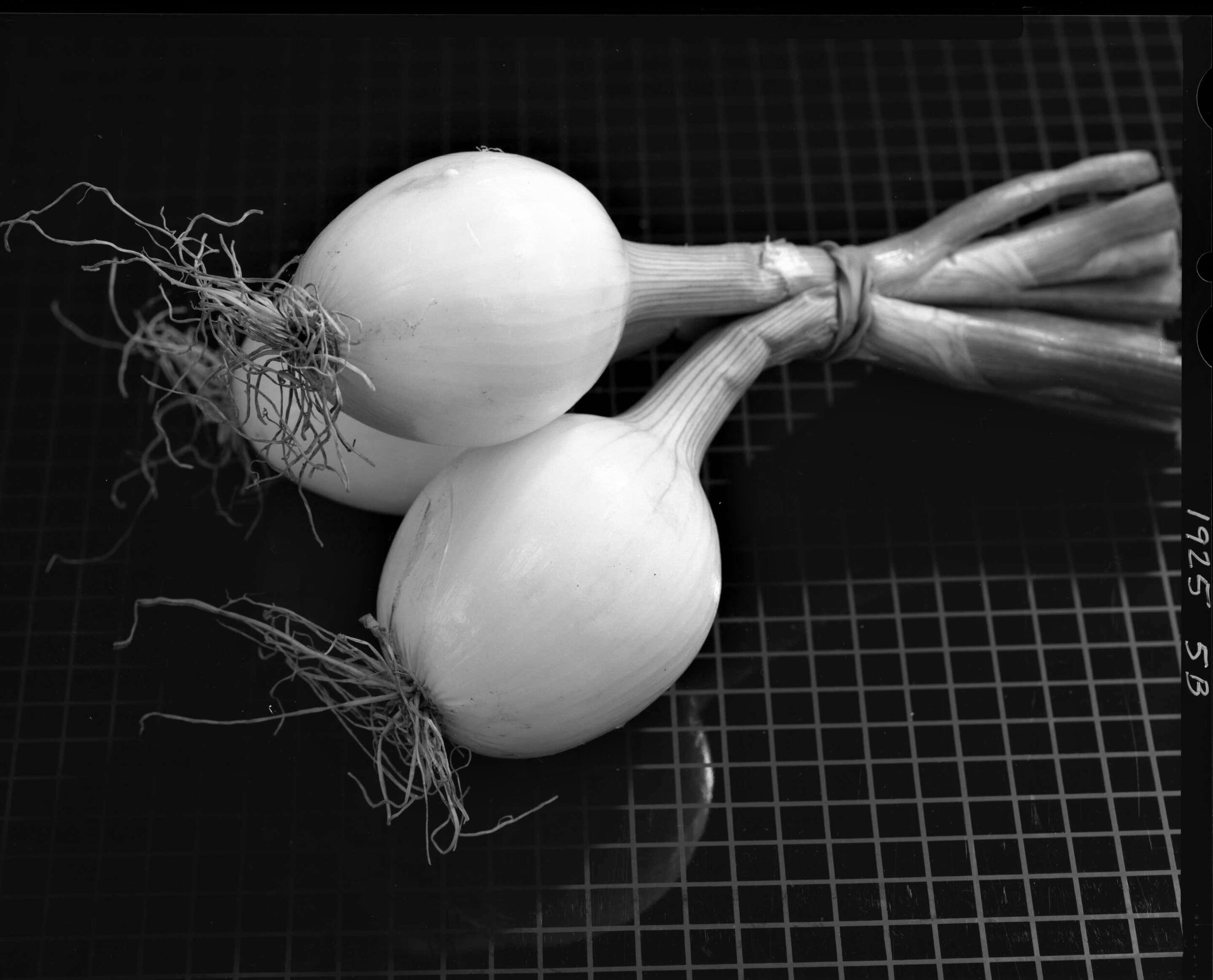 Onions, from the Produce Series