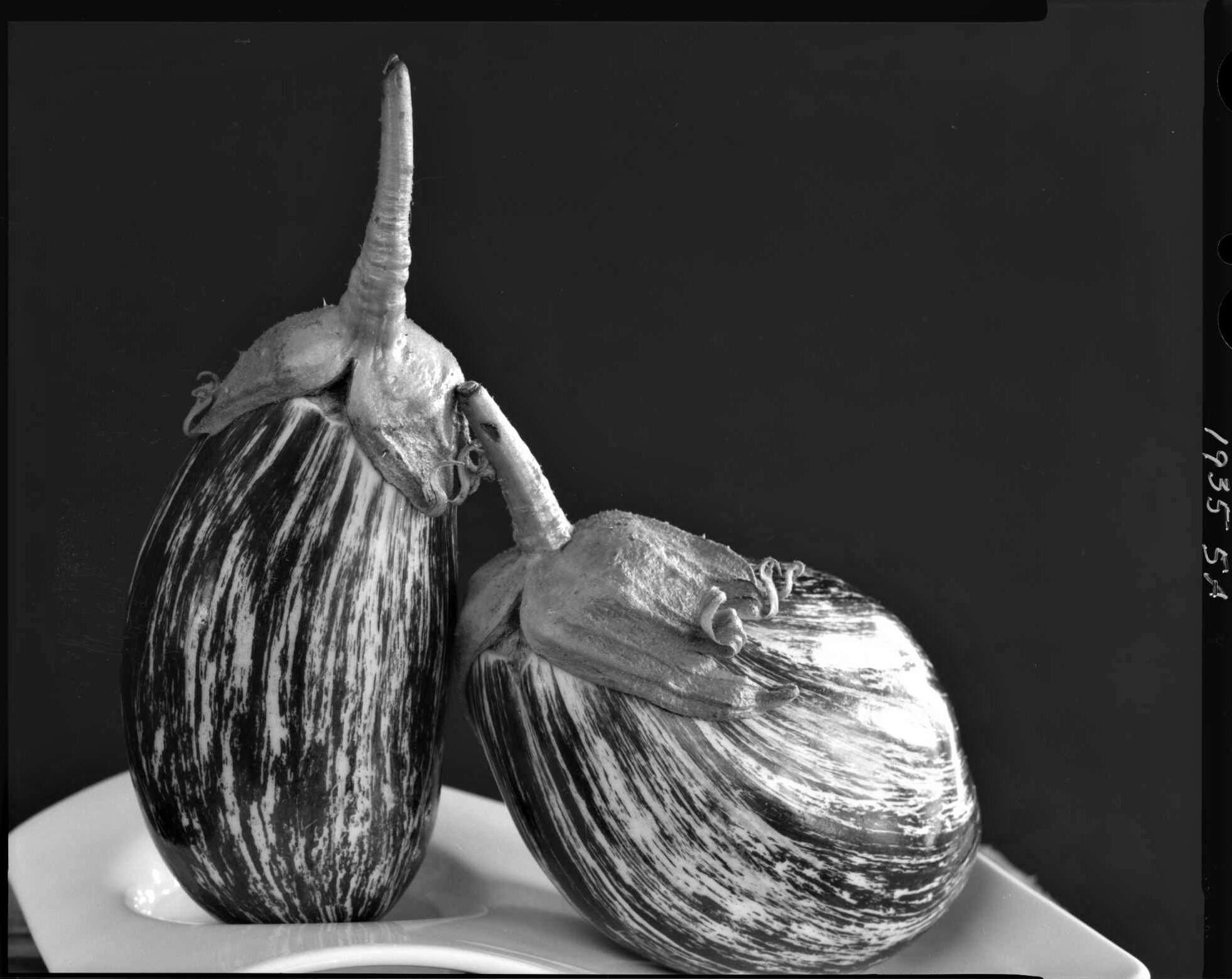Striped eggplant, from the Produce Series