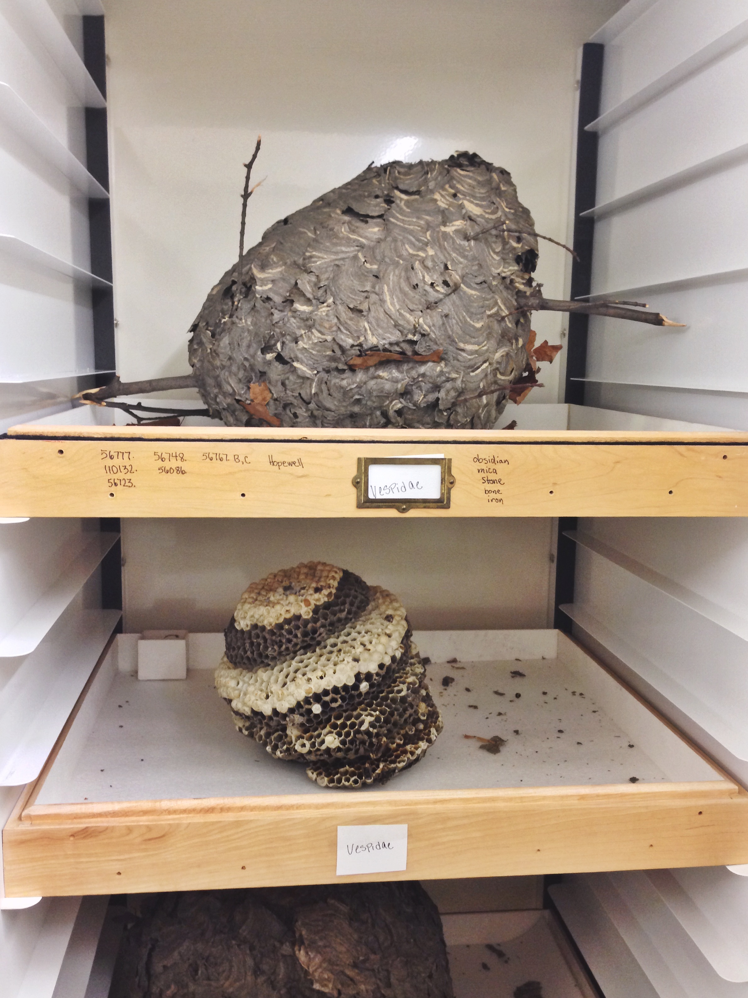 And this is a wasp nest. The nest on the top shelf is made from the wasps spit and any mud/sediment that they use. The nest on the lower shelf is the interior of the first nest. Pretty amazing, nature's little architects.