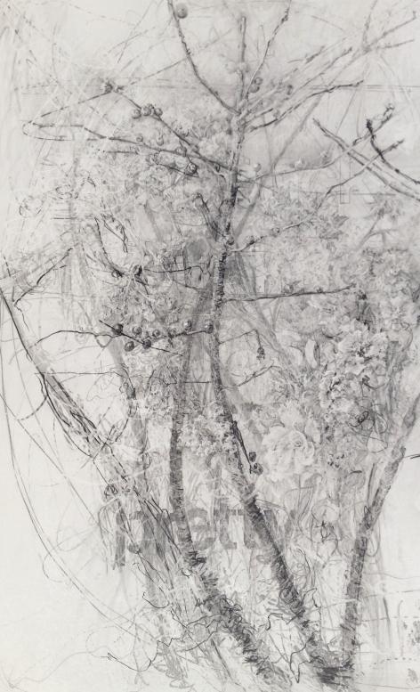 berries-and-delphinium-graphite-on-claybord-19-5x12-2015.jpg