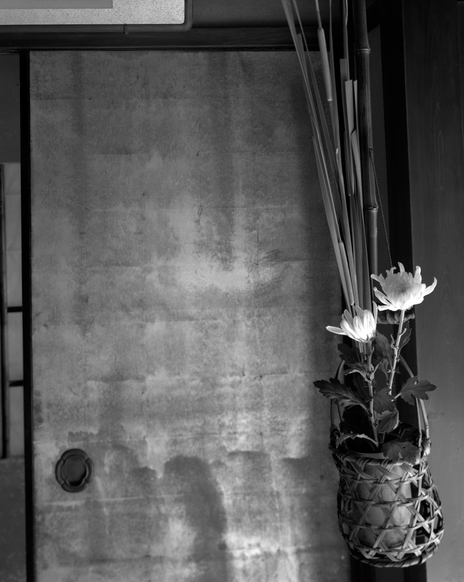 flowers in hanging pot,vweb.jpg