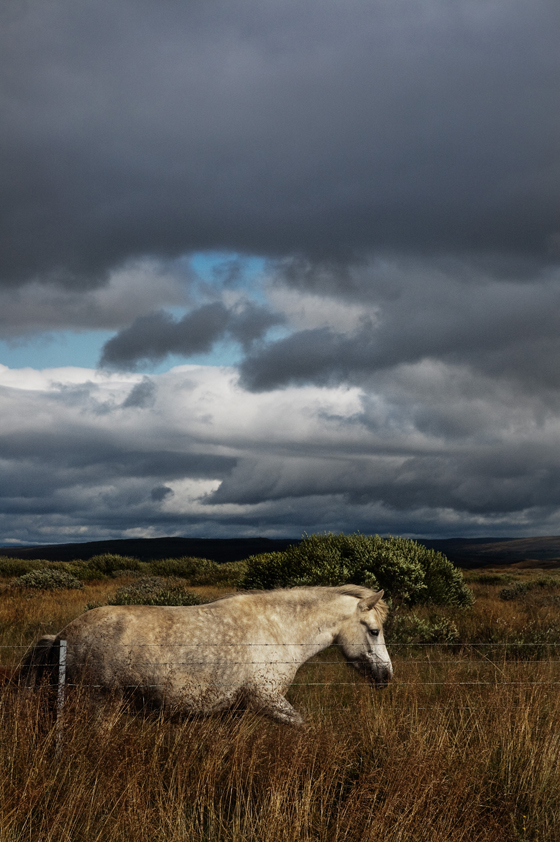 Iceland_horse_01.jpg
