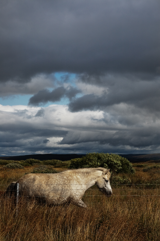 Iceland_horse_01 copy.jpg