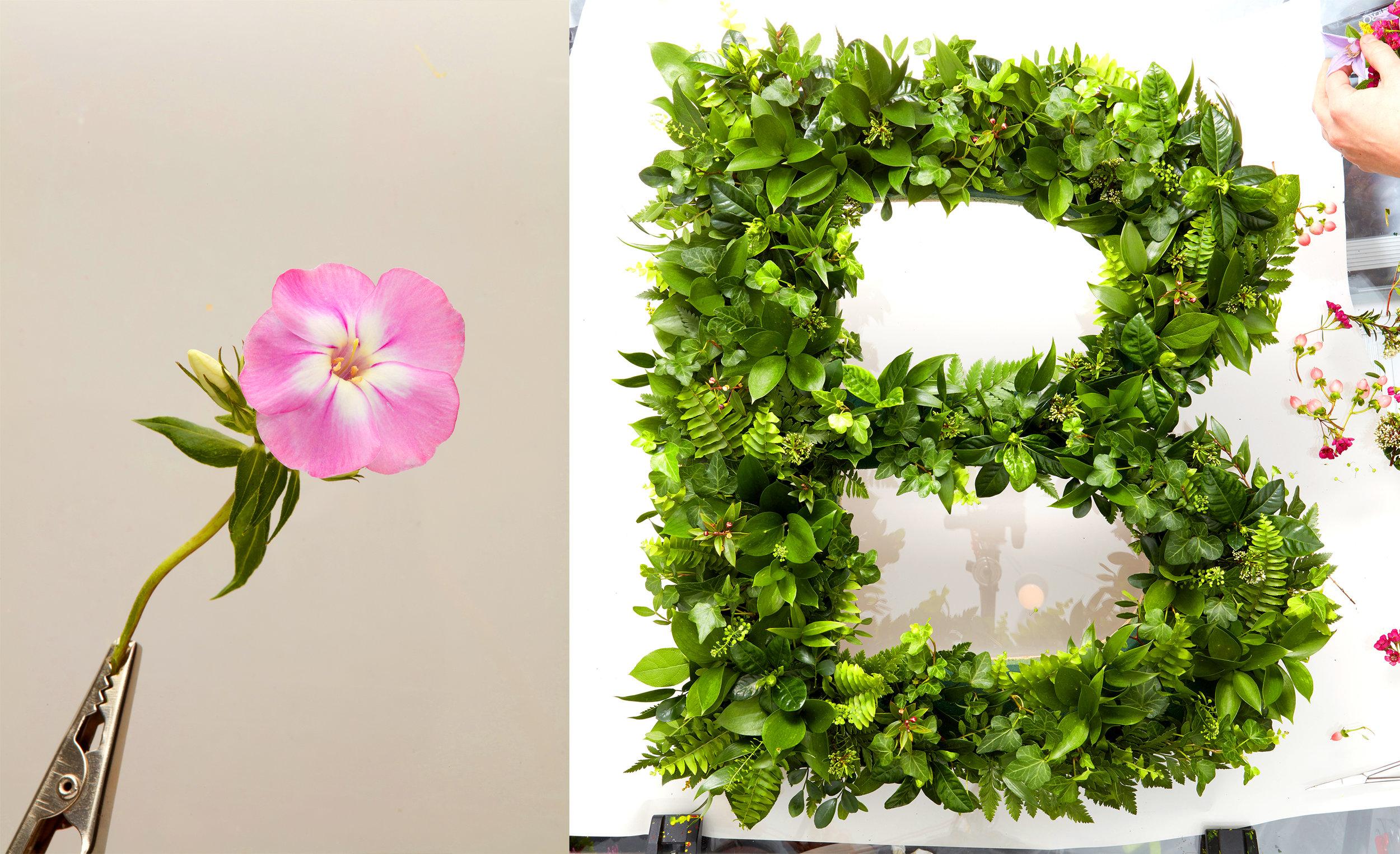 FlowerType3.jpg