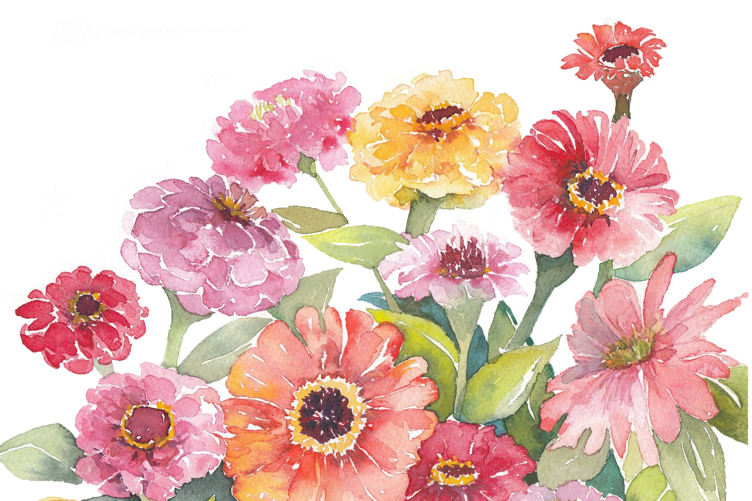 Zinnias really are the best flower in the garden.