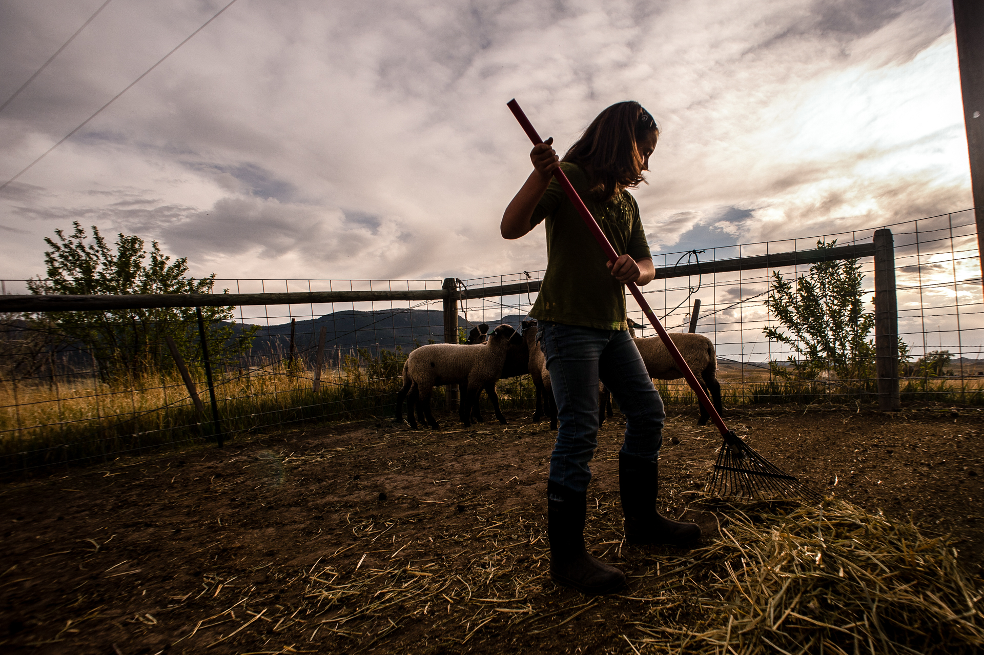 Kodie Booth, a fourth-grader from Livingston, Mont., does evening chores at her families small farm. The entire family is active in the Montana 4-H program where Kodie and her 13-year-old brother Dalton raise sheep for their projects.