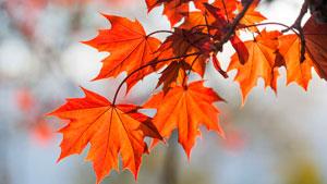 blog_autumn_leaves_1540.jpg