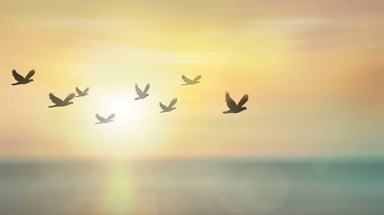 peace_of_mind.jpg