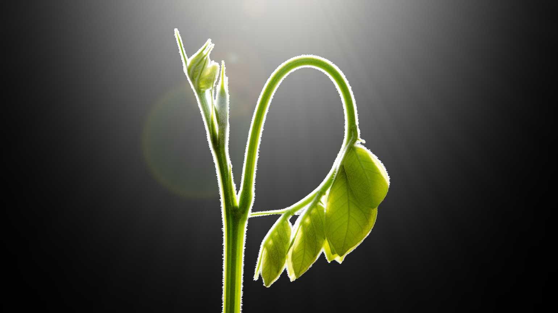 miracle_plant.jpg