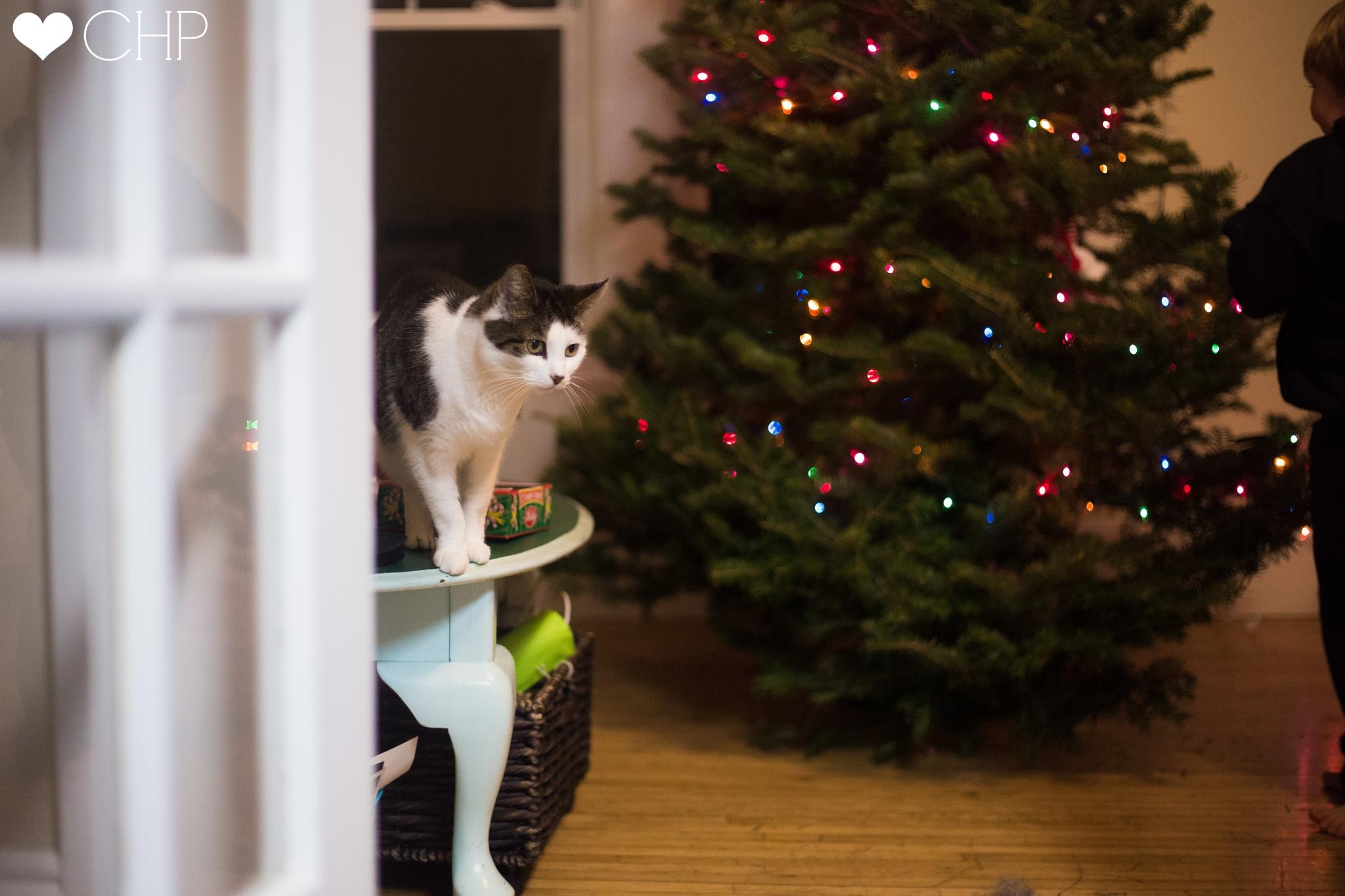 Christmas-Photographer-in-Maine